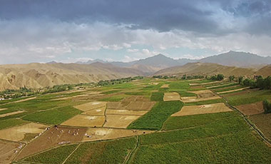 Still photo of Afghan crops from Afghan Trade Goods promotional video (2017)